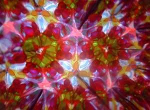 tomy20110311.jpg